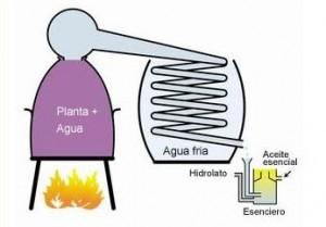la-destilacion-al-vapor-de-agua-300x209
